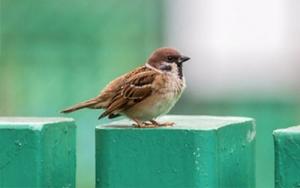 Johnson Group Bird Control Solutions