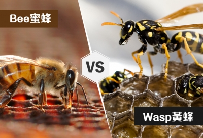 Johnson Group Save Local Bee Conservation Program; The differences between bee & wasp