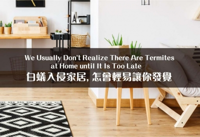 How to Prevent Termite