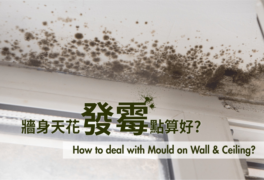 Johnson Group Mould Removal & Prevention Service